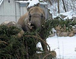 слоны едят елку