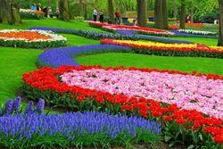 В Петербурге в субботу откроется фестиваль тюльпанов