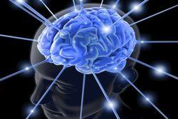 Способность быстро мыслить напрямую зависит от уровня холестерина – медики