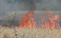 В Николаевской области горело поле Аркадия Корнацкого – версии