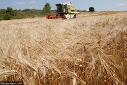 Продовольственную безопасность Украины гарантирует аграрный фонд