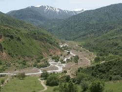 Леса Узбекистана