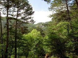 Леса Крыма стали недоступны для отдыхающих и местного населения