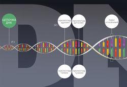 Ученые нашли ген, отвечающий за время смерти человека