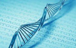 Открыт ген, который управляет длительностью жизни клетки