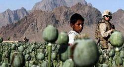 С начала года в России изъята почти тонна афганского героина