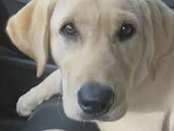 ТОП видео: собаки не люди - гончая спасла котенка, приютив его у себя