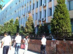 Часть елок зеленая, другие - с рыжими верхушками