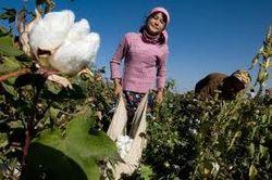 За сентябрь Египет экспортировал хлопка на 8 миллионов долларов
