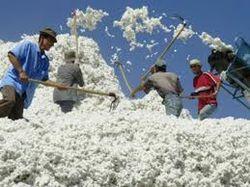 Казахстан готовится к уборке хлопка