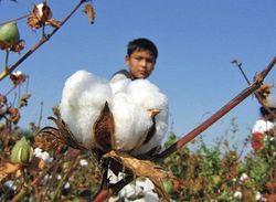 В Таджикистане наконец-то стартовала посевная хлопчатника