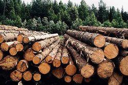 Беларусь предложила России древесину для строительства домов погорельцам
