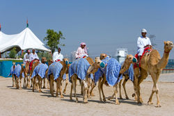 Смертельный ближневосточный коронавирус могут передавать... верблюды