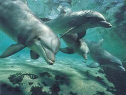 Дельфины зовут друг друга по имени – ученые