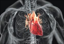 Ученые скоро сумеют полностью восстановить сердце после инфаркта