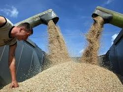 Экспорт украинского зерна составил 17,3 млн. тонн