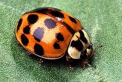 Ученые доказали существование биологического оружия у насекомых