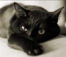 Кошки подталкивают людей в суициду и провоцируют депрессию – ученые