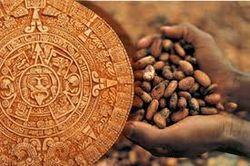 Племена майя делали из какао соус