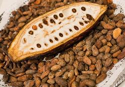 За последний год мировая стоимость какао упала