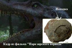 Китайцы показали яйца динозавра
