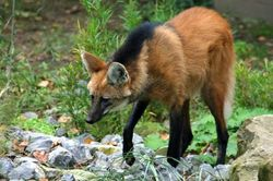 Инвестиции в науку: ученые из Бразилии клонируют редкостных животных