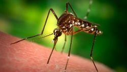 Ученые выяснили принцип выбора жертвы комарами