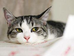 В России кошка спасла ребенка – соцсети о животных-спасателях