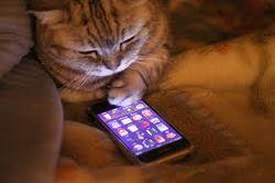 Google создал приложение для автопортретов котов