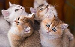 продажа котят