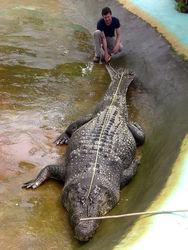 По сектору Газа ходила большая крокодила