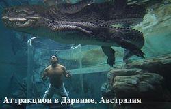 В Кривом Роге голый мужчина нырнул в аквариум с рыбой на продажу