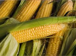 Трейдеры в ожидании роста цен на фьючерс кукурузы
