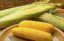 Индийская кукуруза пользуется небывалым спросом