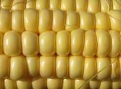 рынок кукурузы