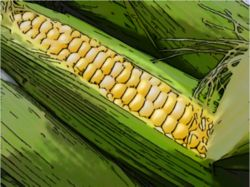 Обзор мирового рынка кукурузы