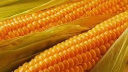 Китай подпишет соглашение о экспорте кукурузы из Украины