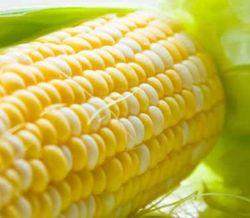 Кукуруза и соя в четверг подешевели на бирже