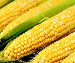 Рынок кукурузы начал повышательный тренд
