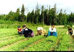 Подростки Беларуси часть лета проведут в трудовых лагерях