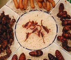 Бон-аппетит – ученые хотят заменить мясо личинками насекомых