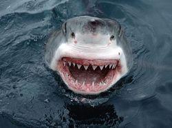 Стоит ли плавать с акулами-людоедами даже ради благих целей – споры ВКонтакте