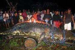 ТОП видео YouTube: самый большой крокодил в мире скончался на Филиппинах