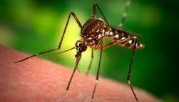 Кризис провоцирует новую вспышку малярии в Греции
