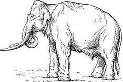 Сенсационная находка в Кабардино-Балкарии – останки южного мамонта