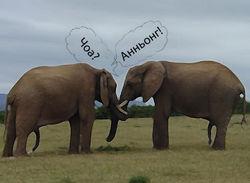 Мир перевернулся: вслед за китом заговорил слон