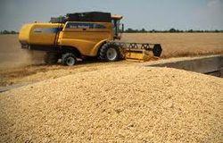 На мировом зерновом рынке у Украины имидж стабильного игрока