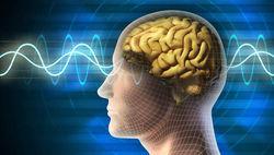 Ученые изучили отличия работы мозга медиумов и обычных людей
