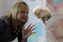 Ученые сделали мозг в электронном виде