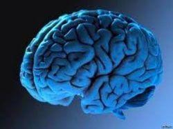 Ученые подтвердили Дарвина: мозг человека - результат эволюции